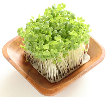 Broccoli Sprouts with Plate